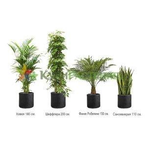 Комплект растений «Антрацит» (Anthracite)