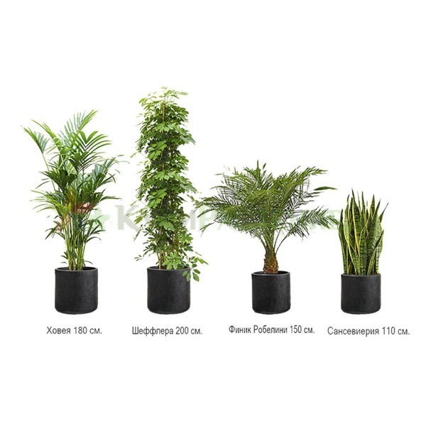 Комплект растений «Антрацит»