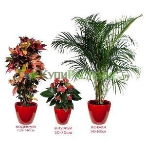 Комплект растений «Аврора» (Aurora)