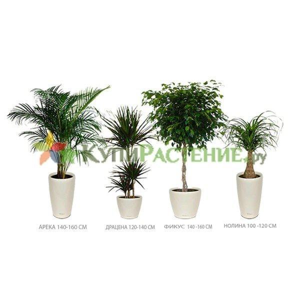 Комплект растений «Белла» (Bella)