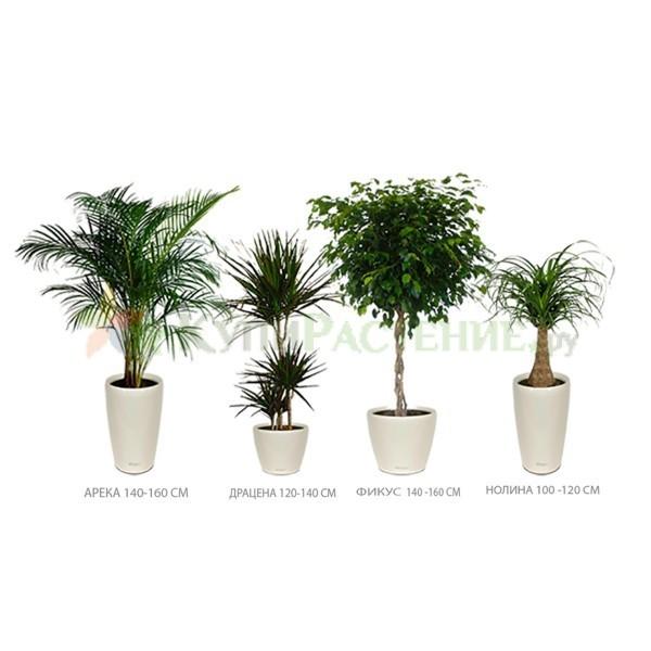 Набор растений «Белла» (Bella)