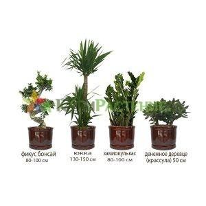 Комплект растений «Экзотика» (Exotic)