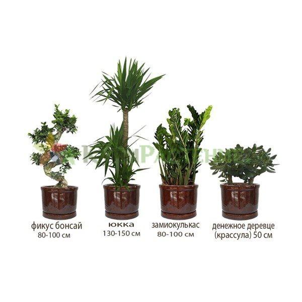 Набор растений «Экзотика» (Exotic)