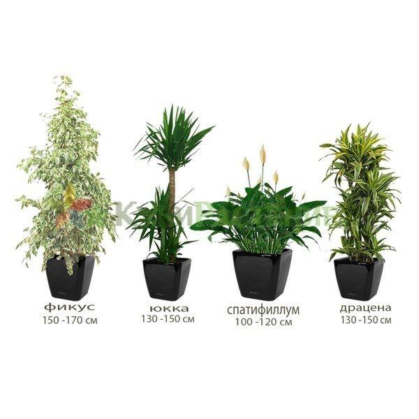 Комплект растений «Флора» (Flora)