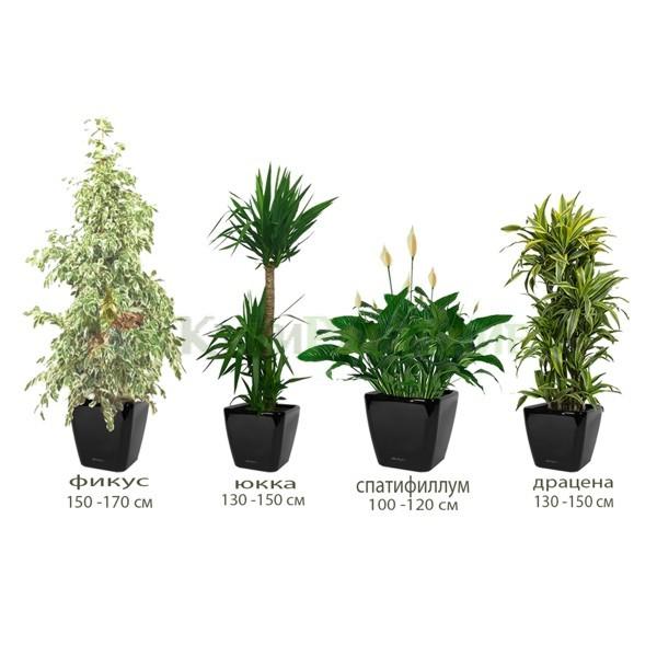 Комплект растений «Флора»