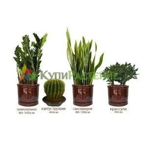 Комплект растений «Мексиканский» (Mexico)