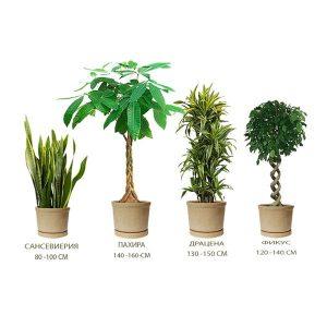 Комплект растений «Оазис» (Oasis)