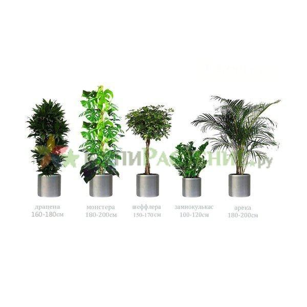 Набор растений «Премиум» (Premium)