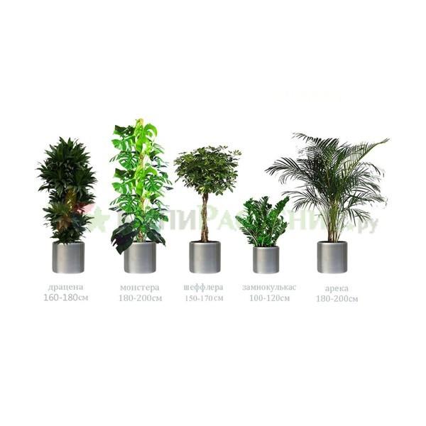 Комплект растений «Премиум»