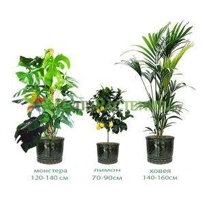 Комплект растений «Сицилия» (Sicily)