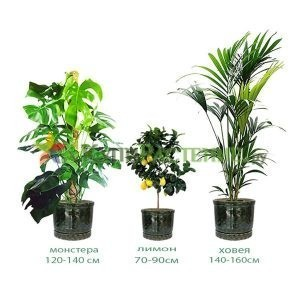 Набор растений «Сицилия» (Sicily)
