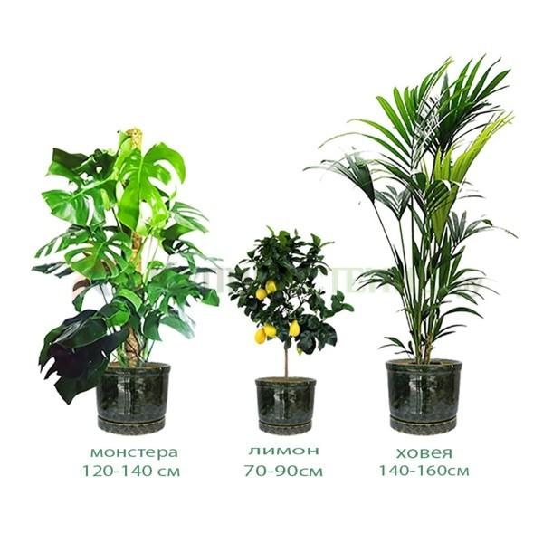 Комплект растений «Сицилия»