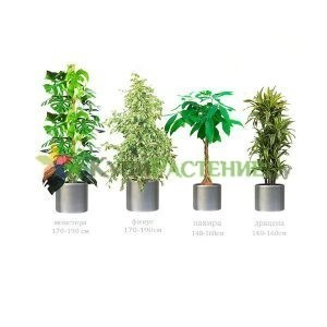Набор растений «Серебристый» (Silver)