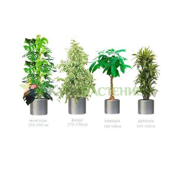 Комплект растений «Серебристый» (Silver)