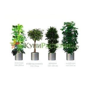 Комплект растений «Стандарт» (Standart)