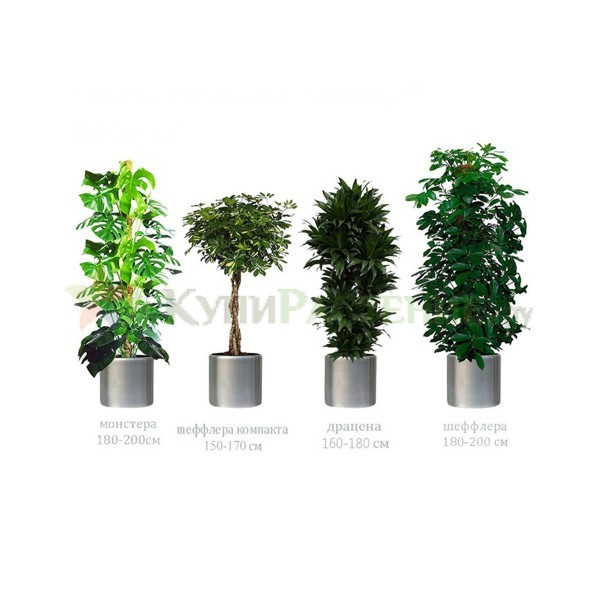 Набор растений «Стандарт» (Standart)