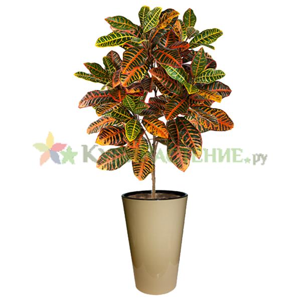 Искусственное дерево кротон (codiaeum)