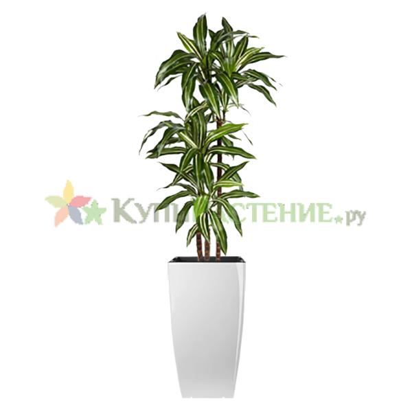 Искусственное дерево драцена (dracaena)