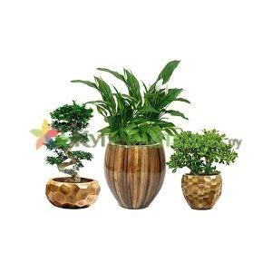 Растения в дизайнерских кашпо