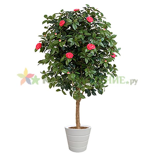 Искусственная камелия (Camellia)