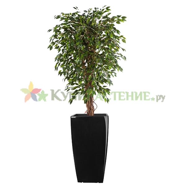 Искусственное дерево фикус (Ficus)
