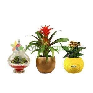 Цветочные композиции и флорариумы