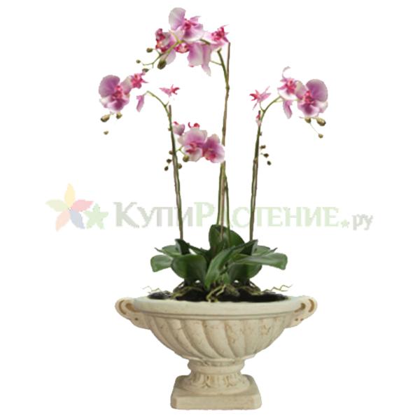 Орхидея в керамическом вазоне