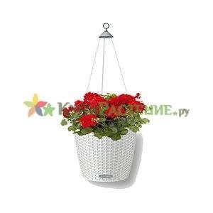Герань в подвесном кашпо под ротанг с автополивом (geranium)