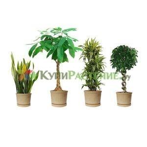 Комплекты растений